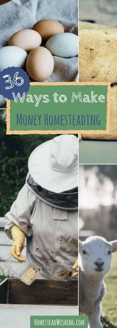 Make money homesteading. Don't miss out on these 36 ways to make money homesteading. If you're living on 1 income, or if want to leave the rat race, this list can give you some great ideas to get started. | Homestead Wishing, Author Kristi Wheeler | http