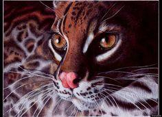 """Samuel Silva """"Margay Cat"""" ballpoint pen drawing"""