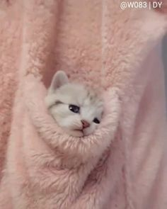 Cute Cats Funny Cats videos 2019 Hi I'm Mr Mirongiya Welcome to Our Channel Mr Mirongiya About This Video Cute Cats Funny Cats videos Cute Cats And Kittens, I Love Cats, Crazy Cats, Kittens Cutest, Fluffy Kittens, Kittens Playing, Cute Funny Animals, Cute Baby Animals, Animals And Pets