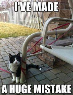 Cat Saturday (34 Photos)