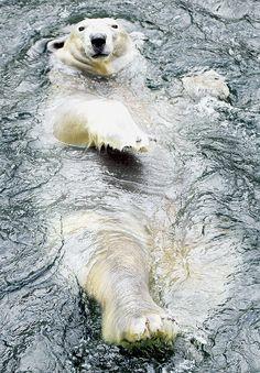 Polar bear @ I love Polar bears would like to photograph them.Please check out my website Thanks Animals baby Animals Especie Animal, Mundo Animal, Amazing Animals, Animals Beautiful, Nature Animals, Animals And Pets, Wild Animals, Cute Baby Animals, Funny Animals
