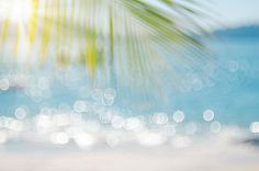 stock photo of vintage - Blur beautiful nature green palm leaf on tropical beach with bokeh sun light wave abstract background - JPG