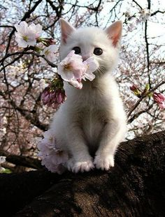 Funny Cute Kittens Meowing Compilation on Cute Names Of Cats case Cute Cartoon Cats And Dogs below Cute Kitten Names For Siamese versus Cute Cat Names In French Cute Kittens, Little Kittens, Kittens Meowing, Tiny Kitten, Pretty Cats, Beautiful Cats, Animals Beautiful, Photo Chat, Tier Fotos