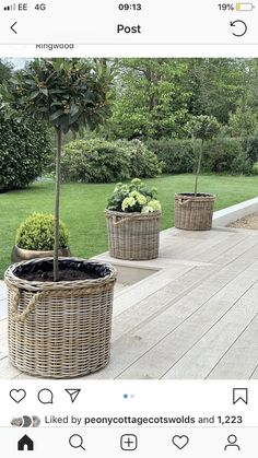 These charming Grey & Buff Rattan planters ooze elegance, complete with waterproof lining and rustic rope handles and edging (ideal for moving around your home and garden) Simply add your favourite garden blooms or a small tree! Rattan Planters, Tree Planters, Basket Planters, Garden Basket, Garden Planters, Potted Trees Patio, Pallet Garden Furniture, Wicker Furniture, Italian Garden
