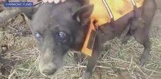 """""""O Grito do Bicho"""": Cão velhinho é resgatado de poço depois de meses -..."""
