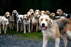 Welsh Fox Hounds by Time Grabber, via Flickr