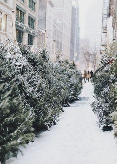 Snowy sidewalks.