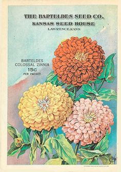 Barteldes seeds - Price list and descriptive catalogue for 1919