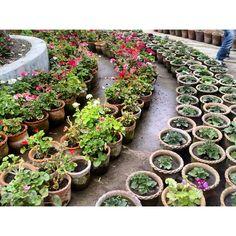 "101 Likes, 2 Comments - Naresh (@nkcreative1) on Instagram: ""#green #plants #flower #nature #naturelover #garden #uttaranchal #india #publicgarden #mussoorie…"""