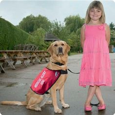Service Dogs For Epilepsy In Pa