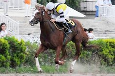 Way of Living (ARG) 2012 Ch.f. (Hurricane Cat (USA)-Wonder Glory (ARG) by Roy (USA) 1st Clasico Carlos Casares (ARG-G3,1000mD,Palermo)