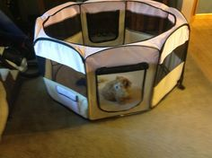 Portable Pet Playpen! Love my pet playpen