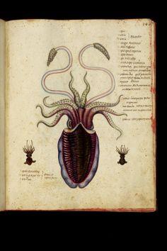 Ulisse Aldrovandi - Theatrum naturale - Late 16th c. - Sepia