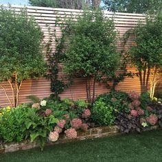 9 отметок «Нравится», 2 комментариев — Shelley Hugh-Jones (@shelleyhjgardens) в Instagram: «Planting one year on in a client's garden . With some judicious pruning the pittosporum shrubs have…»