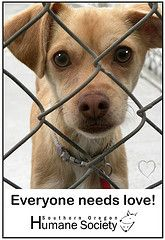 Looking for Love  www.sohumane.org