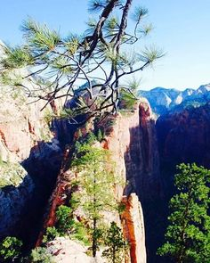 A view from Angel's landing. Go early in the morning to have it pretty much to yourself.  #zion #climbing #hiking #relax #relaxing #peace #angel #rockclimbing #trail #earth #instagood #love #free #utah #photography #picoftheday #freedom