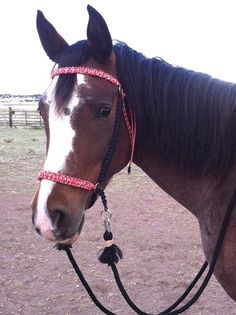 Paracord Bitless Bridle CHIN SLIP Simple Style by SimpleLoops, $45.00