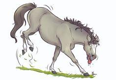 Bruce Millet Portfolio : Cheval - Equitation