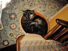Katte og andre dyr - www.123hjemmeside.dk/MelitasMenageri1