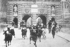 Goats being herded through the old entrance to Valletta.