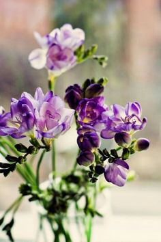 Fresia Flower