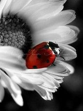 ladybug..I want this framed!