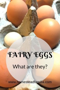 I love my chickens. They are usually full of surprises. We got our first fairy egg and it�s super adorable. What is a fairy egg you ask? When I first saw one, I knew I had to discover what these little cuties were.