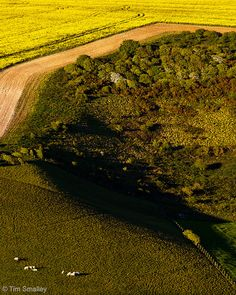 South Downs evening light near Woodingdean, West Sussex, England