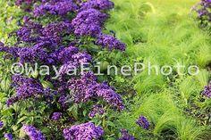 Color Digital Photo Summer Flowers Purple Green Grass Instant