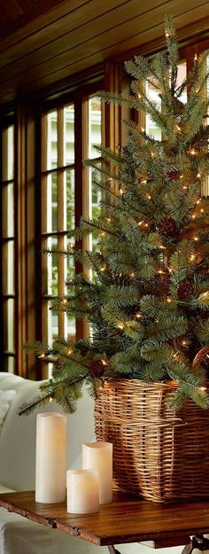 simple fresh cut tree with twinkle lights and pine cones #Christmas
