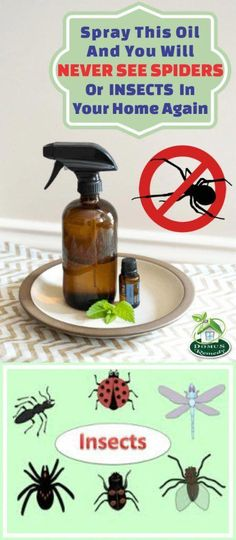 Spray This In Your Home And There Will Be No Flies Cockroaches Or Mosquitoes In . - Spray This In Your Home And There Will Be No Flies Cockroaches Or Mosquitoes In Only 2 Hours - Home Remedies For Spiders, Cold Home Remedies, Natural Health Remedies, Herbal Remedies, Natural Medicine, Herbal Medicine, Medicine Book, Bunion Remedies, Mosquitoes