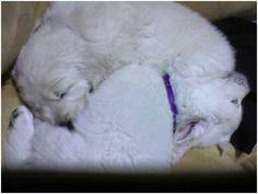 Cutest cuddlers #puppies