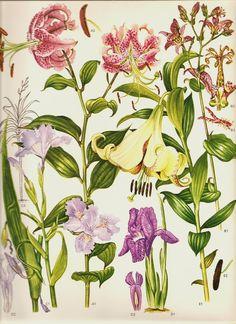 Vintage 1970 Color Art Print Wild Flowers