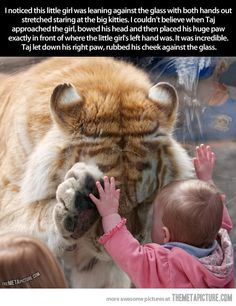 Tiger makes an adorable connection…