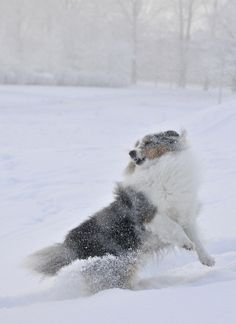 ....more snow action!