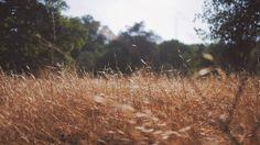 Znalezione obrazy dla zapytania forest grass autumn
