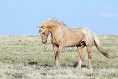 Rock Springs Wild Horses B124672
