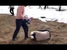 [WARNING: GRAPHIC VIDEO and IMAGES!]  Europeans are Rising Up Against Th...