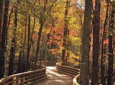 Carolina Colours - Walkways - New Bern, NC--A walk we will have to check out. It's beautiful!