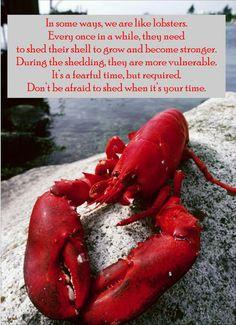 Just like Lobsters