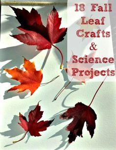 Explore leaves with these gorgeous crafts & hands-on science experiments!