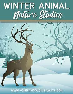 Winter Animal Nature Studies