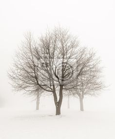 Trees in winter fog fine art photography print - Copyright © Elena Elisseeva Minimal Photography, Fine Art Photography, Winter Scene Paintings, All Nature, Snow Scenes, Architecture Drawings, Winter Wonder, Winter Trees, Photo Tree