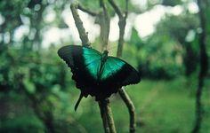 Emerald Iridescence!