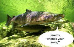 Jeremy's Journal: The Salmon found my Swing