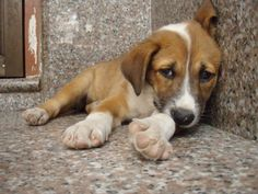 Do You Know A Dog That Is A Victim Of Abuse? This Is What You Should Do. If you don't help, the only other human who can is likely the abuser.