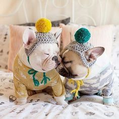 Voted cutest French Bulldogs in the world. What is your opinion about them ?, image, #bulldog #Dog #french