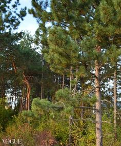 Enchanted Forest, my photo on PhotoVogue (Vogue Italia), digital, 2012, location: Leskovac, Serbia