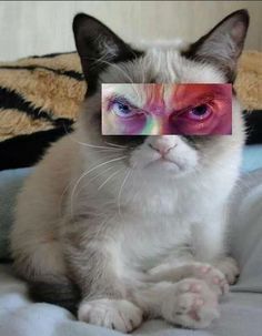 Capaldi Grumpy Cat guys I just died! (I don't know wether I died of laughter or fright at the sudden sight of that...)
