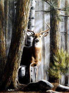 Kevin Daniel Solitary Buck